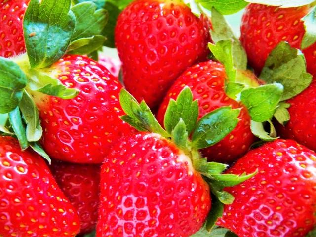 イチゴの品種一覧・通販