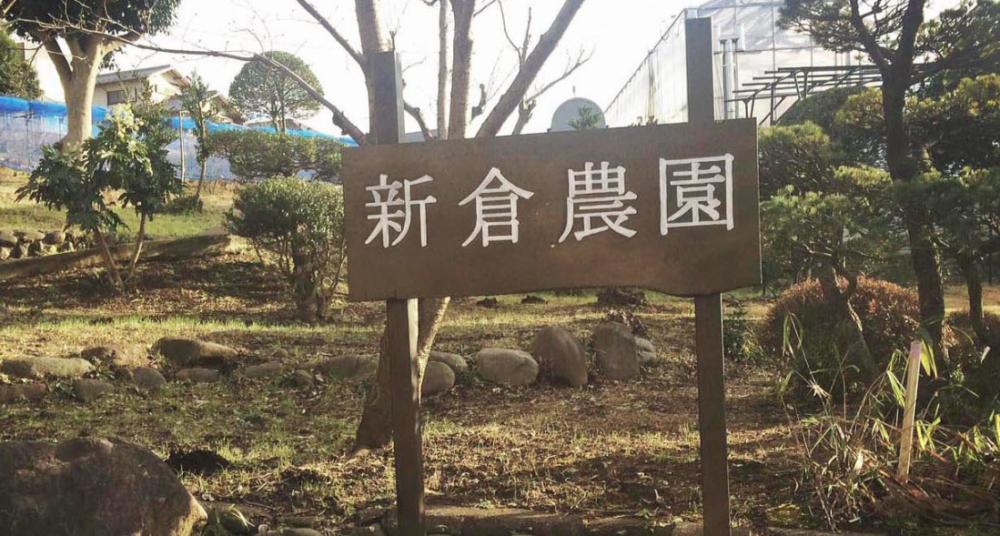 新倉農園のイチゴ狩り