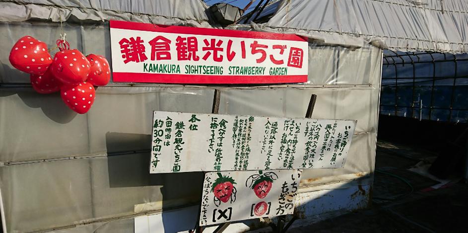 鎌倉観光いちご園