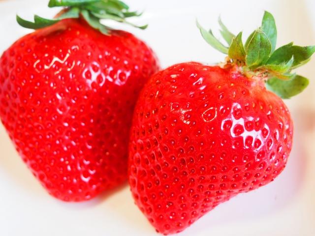 【イチゴ狩り】で美味しいイチゴを選ぶ