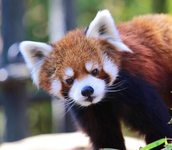 千葉市動物公園イチゴ狩り立ち寄りスポット