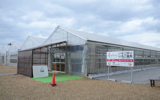 所沢北田農園 苺のマルシェのイチゴ狩り
