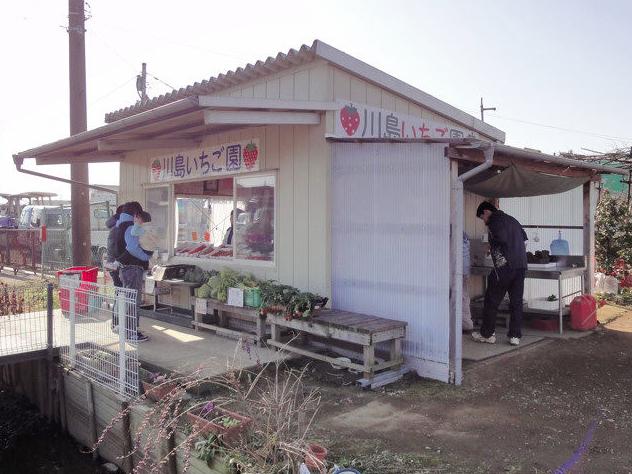 川島いちご園のイチゴ狩り